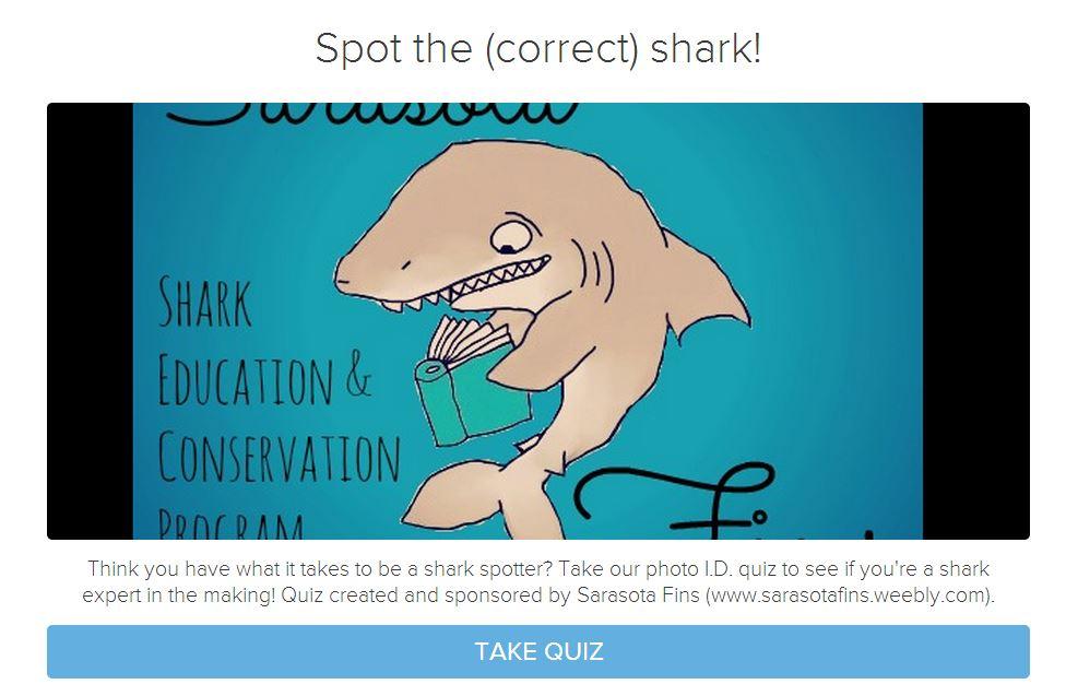 spot the correct shark